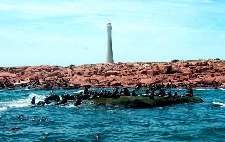 Viagem para o Uruguai: Isla de Lobos abriga fauna de leões marinhos e um dos maiores faróis do mundo.
