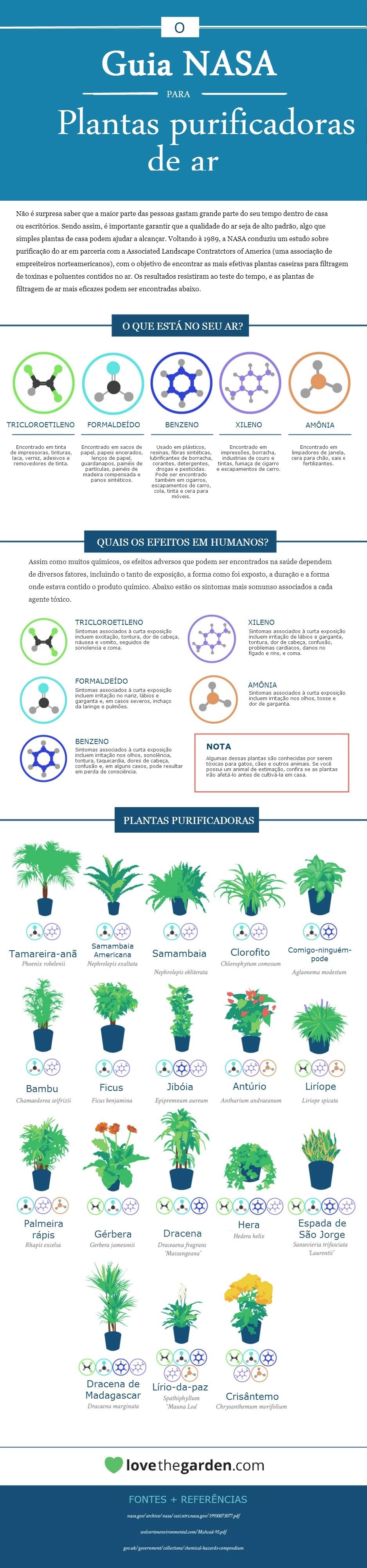 Plantas caseiras que ajudam a purificar o ar
