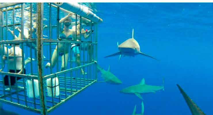 Mergulhar com tubarões é uma opção na África do Sul