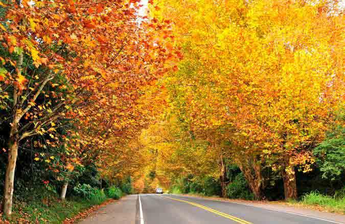 Conhecida também como Rota Romântica, a rodovia passa pela Serra Gaúcha e pelos estados do sul brasileiro.