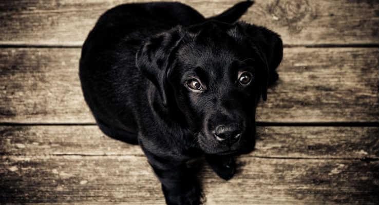 nomes-mais-comuns-de-cachorro-1