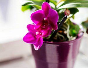 Vasinho de Orquídea