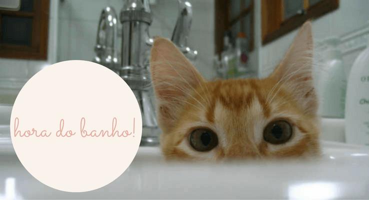 Como dar banho em gato?