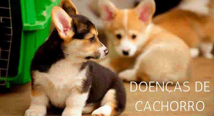 doenças de cachorro