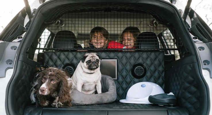 carro para cachorro