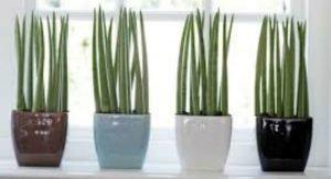 plantas-faceis-de-cuidar