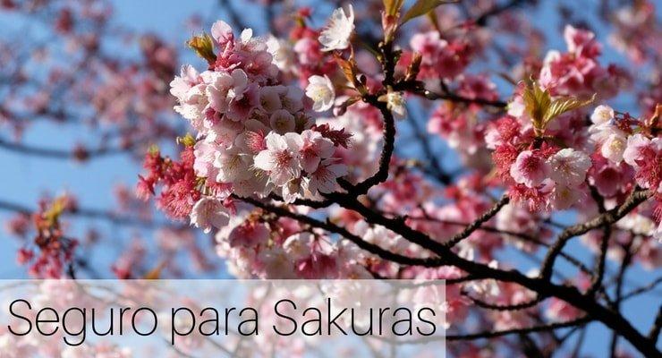 Seguro para Sakuras