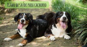 Conheça o plano de saúde para cachorro