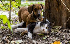 Imagem de animais na floresta para ilustrar o post sobre animais na via: como agir